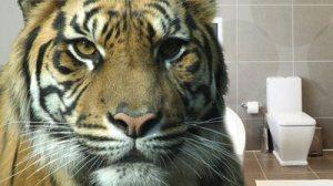 tiger__ext